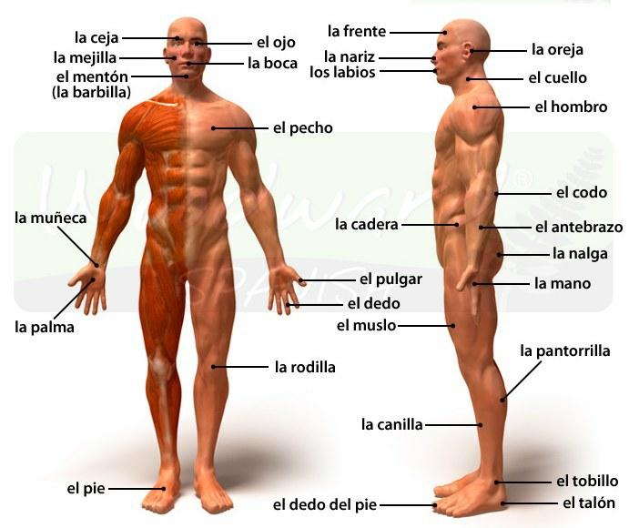 скачать торрент части тела